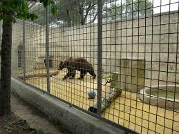 la liberté d un ours picture of zoo fauverie du faron toulon