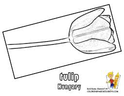 Hungary Coloring Pages Of Tulip Flower At YesColoring