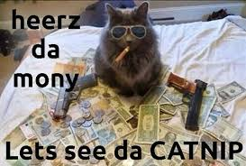 thug cat thug cat lifes on imgfave