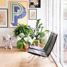 ausgefallene zimmerpflanzen 7 pflanzen die garantiert