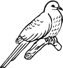 Great Lizard Cuckoo Bird Coloring Pages