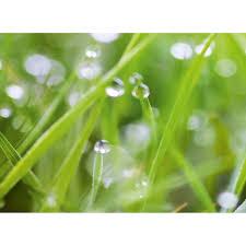 spritzschutz rückwand wandart easy 80 cm x 58 5 cm grass d4002p bril