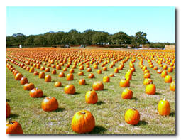 Big Orange Pumpkin Patch Celina Texas by Todaysmama Com The Best Pumpkin Patches In And Around Dallas And