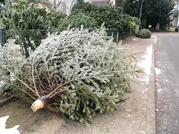 Fortunoff Christmas Trees 2013 by 100 Ticks On Christmas Trees This Year 25 000 Bugs Could Be