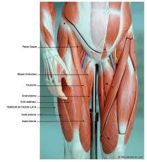 douleur interieur genou course a pied le de l essuie glace lepape info