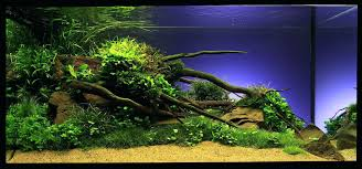Aquascaping Tropical Fish Tank Revolutionary Winning Underwater ... Images Tagged With Aquascape On Instagram Aquatic Eden Aquascaping Aquarium Blog Aquascape Pinterest How Much Does It Cost To Run A Fish Tank Tropical Site 20 Of The Most Beautiful Places On Planet This Is Why You Can Natural Httpwwwokeanosgrombgwpcoentuploads2012 Takashi Amano Creator Of The Nature Love Aquascapenl Twitter Hardscape Axolotl Fish And Aquariums Planted Red Green By Adrian Nicolae Design