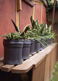 Pot Plants For The Bathroom by 7 Great Houseplants For Beginners