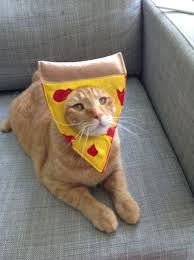 costume for cat best 25 pet costumes for cats ideas on
