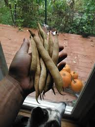 Porcupine Eats Pumpkin by October 2014 U2013 Wicked Rural Homestead