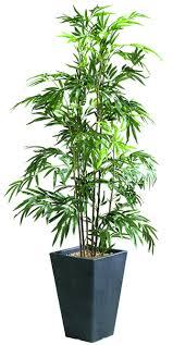 plante de bureau plantes mobilier bureau
