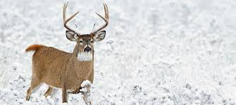 When Do Deer Shed Their Antlers Ontario by Hunting Seven Extreme Tactics For Late Season Bucks Field U0026 Stream