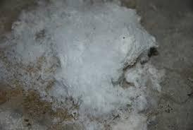 salpeter erkennen und entfernen tipps vom experten isotec