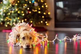 Christmas Tree Shop Warwick Ri Flyer by The Origins Of 12 Christmas Words Mental Floss