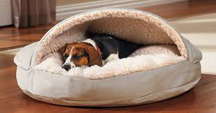 faqs about dog beds at drs foster and smith