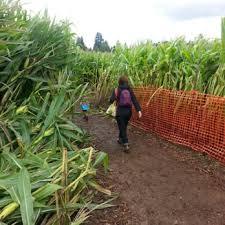 Sauvies Island Pumpkin Patch Corn Maze by Liepold Farms Fall Festival And Pumpkin Patch 14 Photos U0026 19