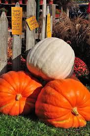 Pumpkin Patch Fort Wayne 2015 by 2306 Best Pumpkins Pompoenen Images On Pinterest Pumpkins
