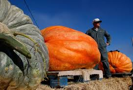Half Moon Bay Pumpkin Festival Biggest Pumpkin by Halloween In California