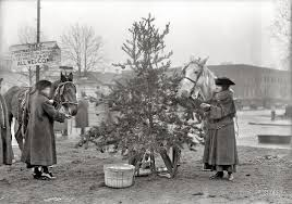 Baltimore County Christmas Tree Pickup 2016 by History In Photos 2016