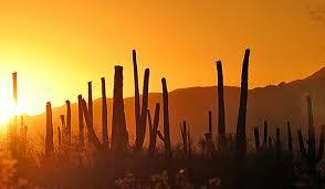 Earth Floor Biomes Desert by Deserts