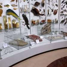 Wall Mounted Museum Showcase 8