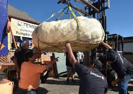 Half Moon Bay Pumpkin Festival Winner by Contest In Half Moon Bay Dubs 1 969 Pound Pumpkin The Plumpest Fox40