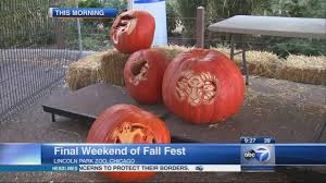 Pumpkin Patch Near Lincoln Il by Lincoln Park Zoo Celebrates Last Weekend Of Fall Fest