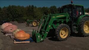 Siegels Pumpkin Farm by Giant Pumpkins Weighed In Lockport Wgn Tv