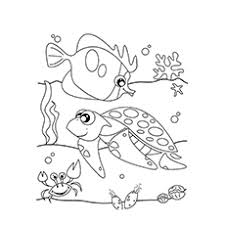 Ocean Life Shells Coloring Pages