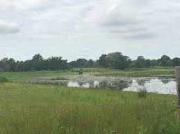 Lake Proctor Wilderness Loop Trail Florida