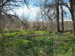 Los Patios San Antonio Tx by Salado Creek Greenway Loop 410 To Lady Bird Johnson Park San