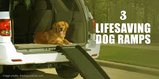 5 Best Dog Ramps — Folding, Telescoping, Steps, Stairs & More Inexpensive Doggie Ramp With Pictures Best Dog Steps And Ramps Reviews Top Care Dogs Photos For Pickup Trucks Stairs Petgear Tri Fold Reflective Suv Petsafe Deluxe Telescoping Pet Youtube The Writers Fun On The Gosolvit And Side Door Dogramps Steps Junk Mail For Cars Beds Fniture Petco Lucky Alinum Folding Discount Gear Trifolding Portable 70 Walmartcom 5 More Black Widow Trifold Extrawide