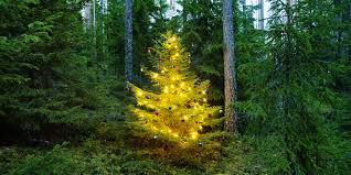 Christmas Tree Disposal Nyc by How Green Is Your Tree Sustainable Holiday Tips Huffpost