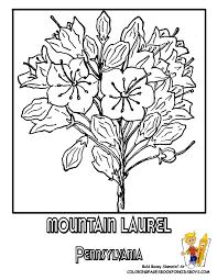 Pennsylvania Mountain Laurel Flower Printable At YesColoring