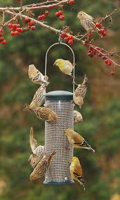 Wild Birds Unlimited: Disappearance Of Usual Birds At Backyard Feeder Some Ways To Keep Our Backyard Birds Healthy Birds In The These Upcycled Diy Bird Feeders Are Perfect Addition Your Two American Goldfinches Perch On A Bird Feeder Eating Top 10 Backyard Feeding Mistakes Feeder Young Blue Jay First Time Youtube With Stock Photo Image 15090788 Birdfeeding 101 Lover 6 Tips For Heritage Farm Gardenlong Food Haing From A Tree Gallery13 At Chickadee Gardens Visitors North Andover Ma