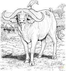 Click The African Buffalo Coloring Pages To View Printable