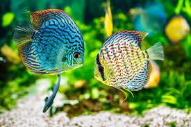 temperatur im aquarium passend zum fisch einstellen