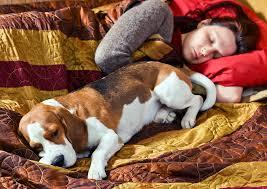 comment empecher chien de monter sur le canapé peut on dormir avec chien