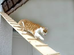 cat stairs elmato cat stairs 3 m co uk pet supplies