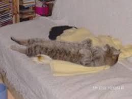 mon fait pipi sur le canapé top mon fait pipi sur le canapé canapé design