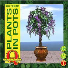 planting wisteria in a pot second marketplace free wisteria plant in a pot by q