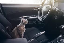 le chat est à l intérieur d une voiture le chat voyage dans une