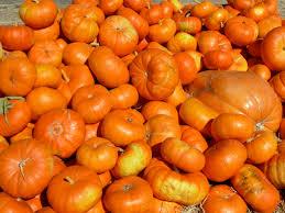 Ardenwood Pumpkin Patch Fremont by Ardenwood Historic Farm Fremont Ca Yelp