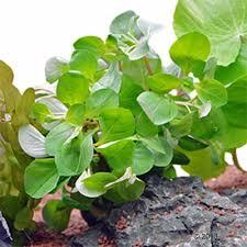 lot de plantes d aquarium pour débutant à prix avantageux chez