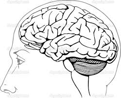 Human Brain Coloring Book Page Of The