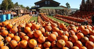 Pumpkin Patch Near Vancouver Wa by Visit Buffalo U0026 Niagara Falls Ny Restaurants Things To Do