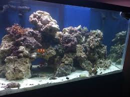 Live Rock Aquascaping - Reef Keeping - Austin Reef Club Home Design Aquascaping Aquarium Designs Aquascape Simple And Effective Guide On Reef Aquascaping News Reef Builders Pin By Dwells Saltwater Tank Pinterest Aquariums Quick Update New Aquascape Of The 120 Youtube Large Custom Living Coral Nyc Live Rock Set Up Idea Fish For How To A Aquarium New 30g Cube General Discussion Nanoreefcom Rockscape Drill Cement Your Gmacreef Minimalist 2reef Forum