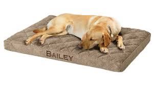 dog beds the benefits of an orvis dog bed