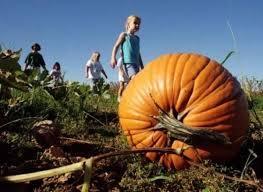 Atlanta Pumpkin Patch Corn Maze by Best Pumpkin Patches Near Atlanta Ga