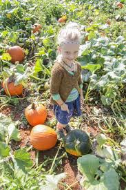 Pumpkin Patch Bend Oregon 2015 by September 2014 Journal Of A Nomad