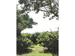 Florida Tile Grandeur Nature by 4173 Shell Rd Sarasota Fl 34242 Mls A4195612